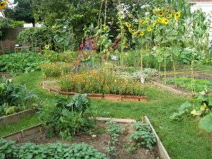Ecology Permaculture Archives Blue Eagle S Blog