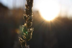 Bl--au-soleil