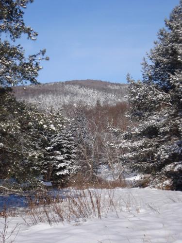 paysage-d-hiver-coniferes