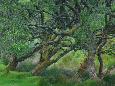 arbres_musicaux