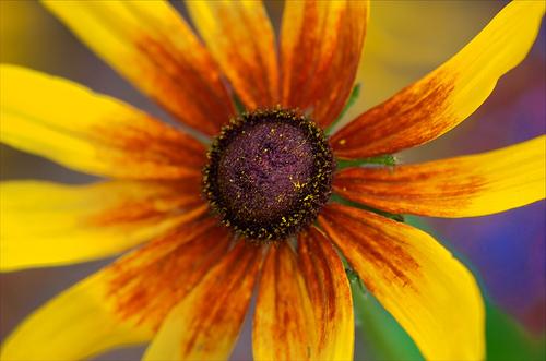 fleur-d-automne