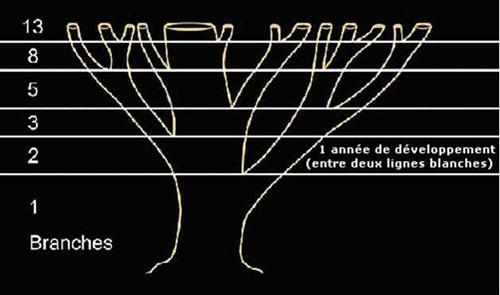 ob_057a49_tree-branches-fibonacci