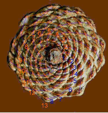 ob_565940_pine-cone