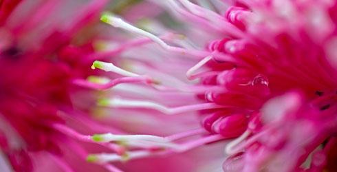 fleur de proche