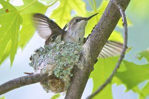 petit oiseau petit nid
