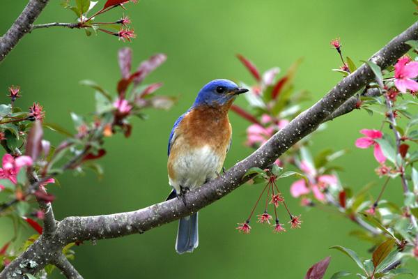 ecologie-ecology-guérison-healing-earth-wisdom-sagesse-de-la-terre-beaute-beauty