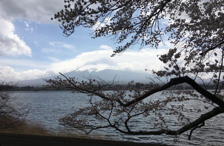 Aigle Bleu au Japon (6)