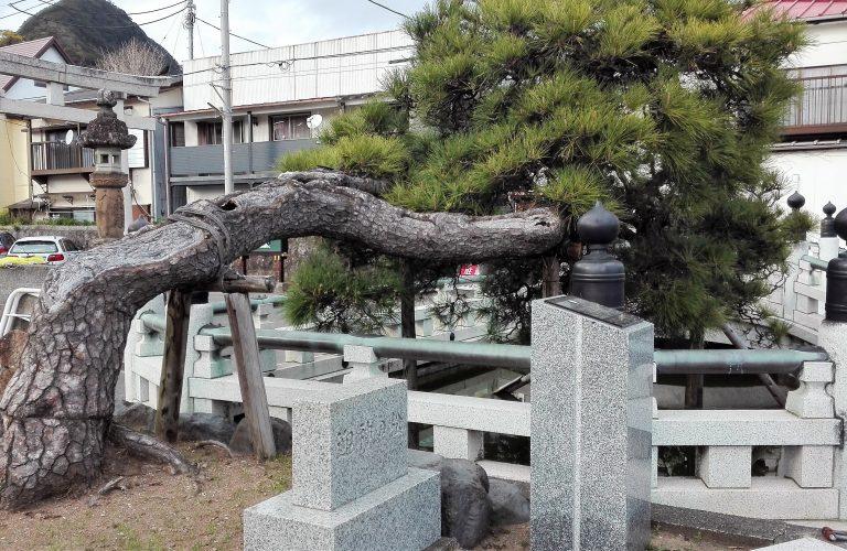 Japon - Blog Aigle Bleu (14)
