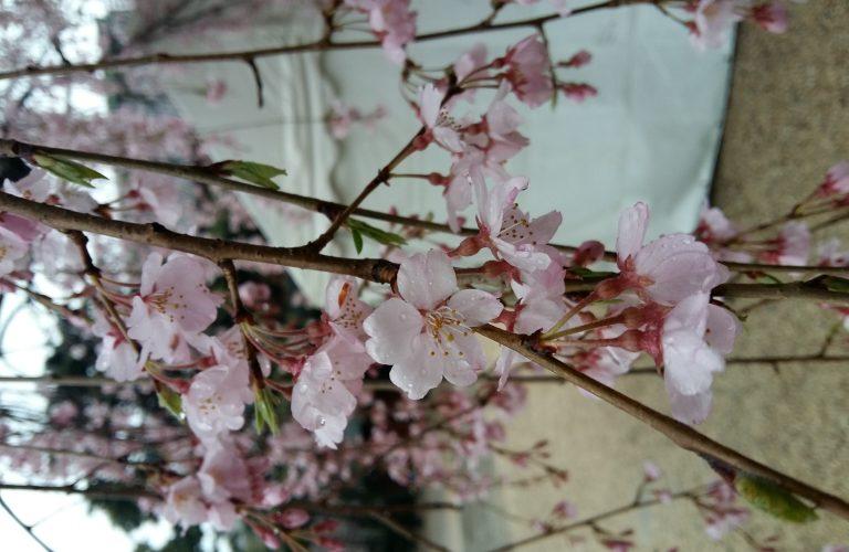 Japon - Blog Aigle Bleu (24)