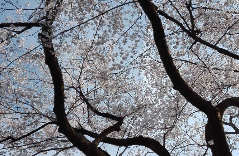 Japon - Blog Aigle Bleu (44)