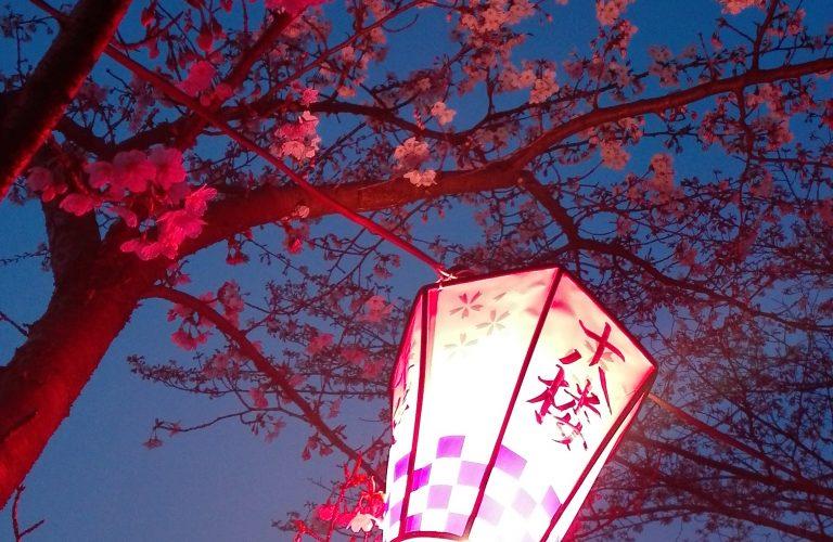 Sakura de nuit
