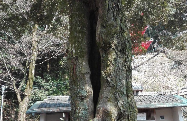 Japon - Blog Aigle Bleu (60)